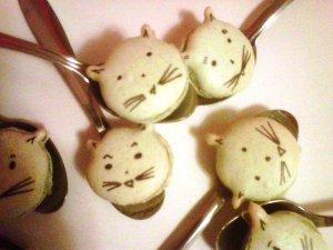 macarons chats